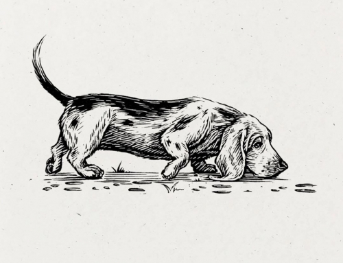 "The Basset Hound's name is derived from the French word ""bas"", meaning ""low thin"