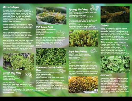 Made a help sheet to identify moss, lichen and liverworts in your garden, balcon